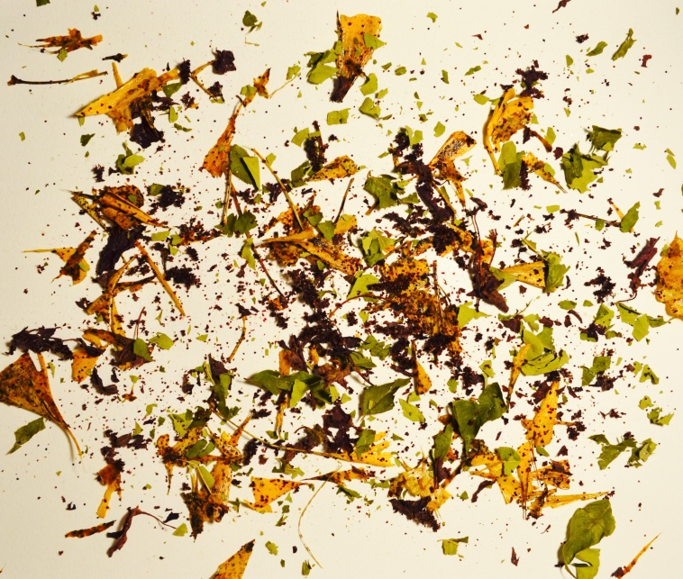 Fraxinus/Ginkgo/Amaranth in Decay