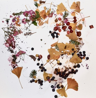 Ginkgo/Rosa/Vitis/Abies in Decay