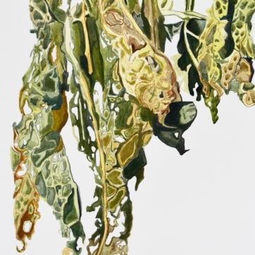 Kale in Decay II