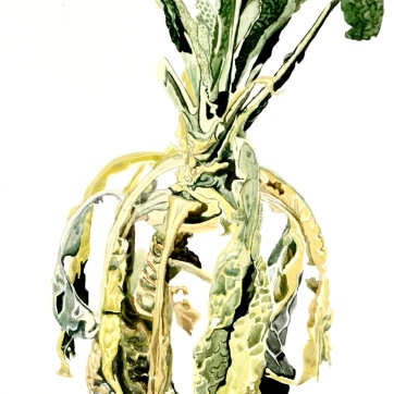 Kale in Decay