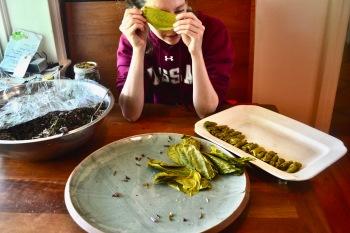 Beech Leaf Dolmades